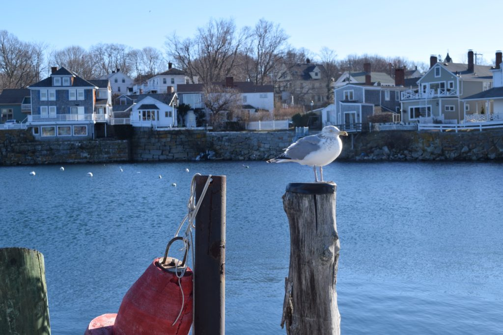 rockport in winter day trip